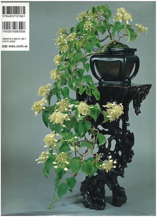《小林国雄的世界:盆栽艺术――地》封底