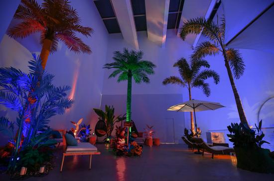 棕榈树林为主题的明信片互动区域