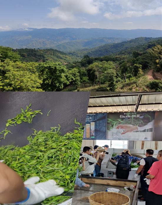 (记者团在南糯山体验炒茶)